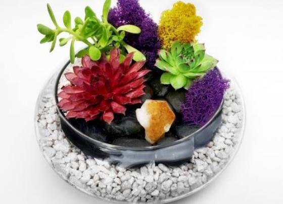 Plant Nite Phoenix